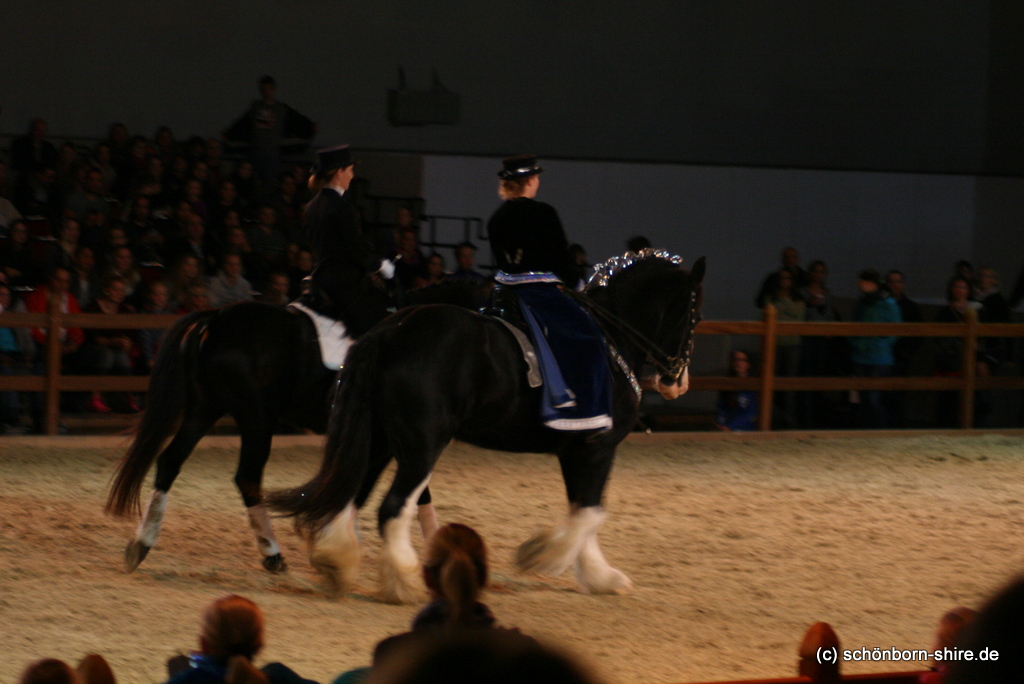 Pas de Deux, KWPN Under Cover & Shire Stute Glory